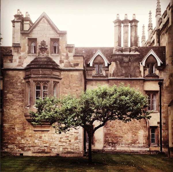 Cambridge tree