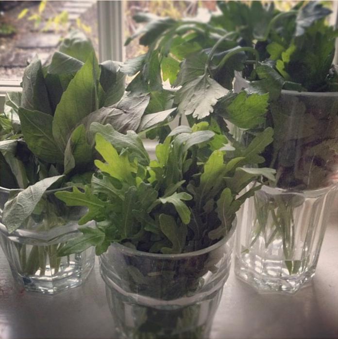 fresh herbs kitchen - Danielle Raine   Creativity Coaching