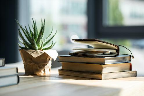 aloe vera plant notebooks sunshine